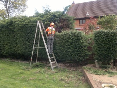 Trimming Trees in Yeovil