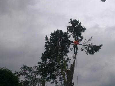 landscaping Yeovil (9)