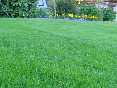 New Lawns Weston super Mare