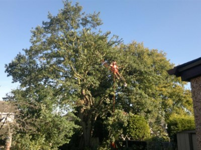 tree-hedge-trimming (3)
