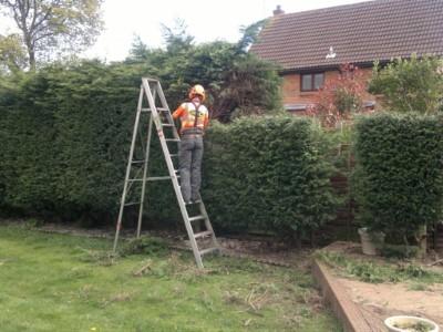 tree-hedge-trimming (5)